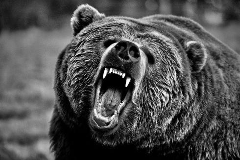 LarsScinny-AngryBear2.jpeg